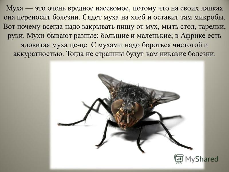 Муха это очень вредное насекомое, потому что на своих лапках она переносит болезни. Сядет муха на хлеб и оставит там микробы. Вот почему всегда надо закрывать пищу от мух, мыть стол, тарелки, руки. Мухи бывают разные: большие и маленькие; в Африке ес