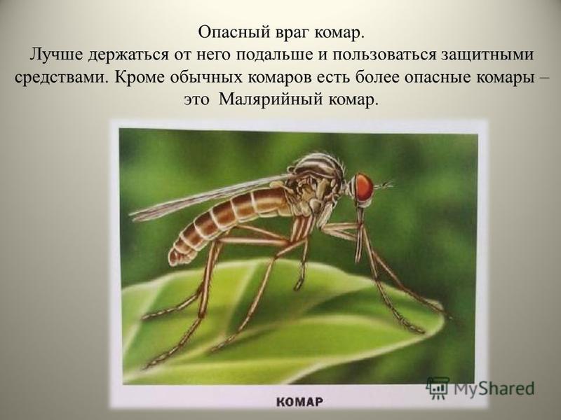 Опасный враг комар. Лучше держаться от него подальше и пользоваться защитными средствами. Кроме обычных комаров есть более опасные комары – это Малярийный комар.