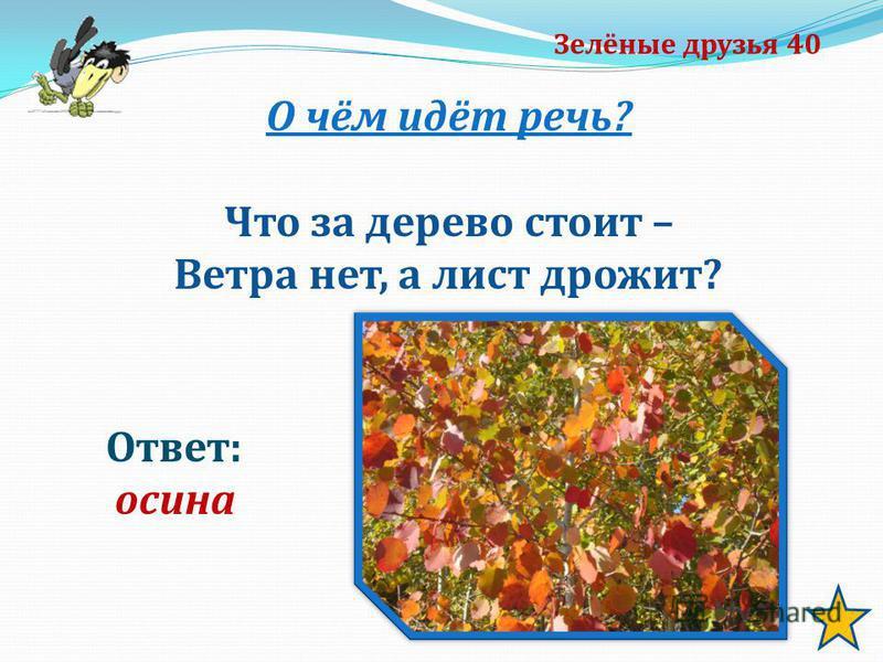 Зелёные друзья 40 О чём идёт речь? Что за дерево стоит – Ветра нет, а лист дрожит? Ответ: осина