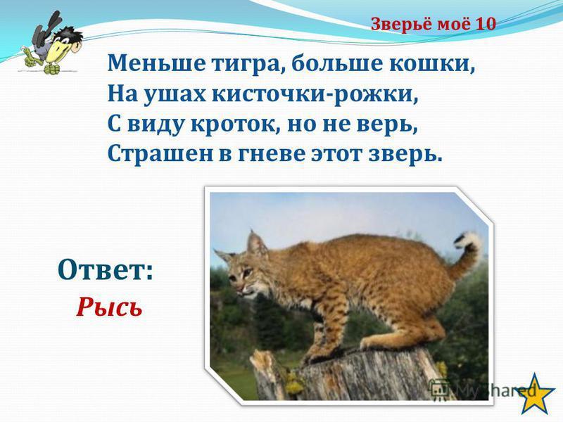 Зверьё моё 10 Ответ: Рысь Меньше тигра, больше кошки, На ушах кисточки-рожки, С виду кроток, но не верь, Страшен в гневе этот зверь.