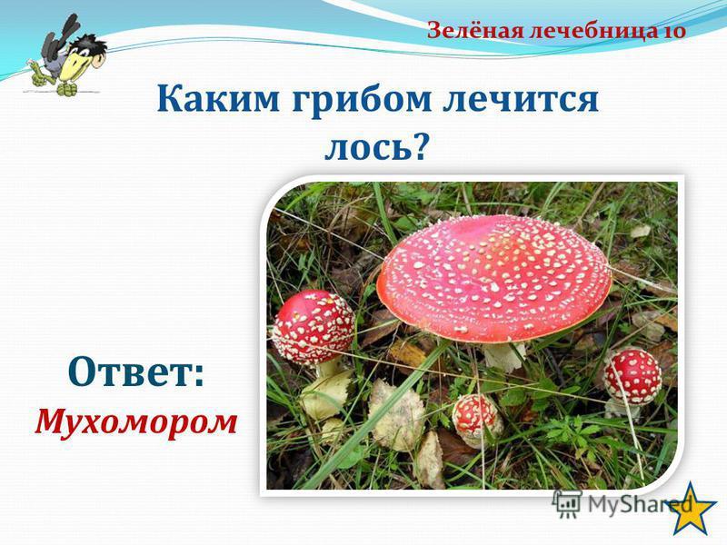 Зелёная лечебница 10 Ответ: Мухомором Каким грибом лечится лось?