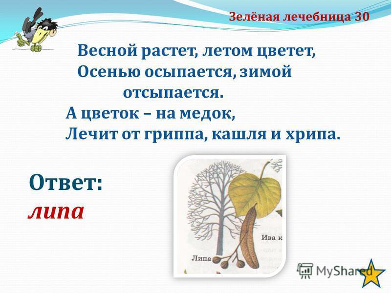 Зелёная лечебница 30 Ответ: липа Весной растет, летом цветет, Осенью осыпается, зимой отсыпается. А цветок – на медок, Лечит от гриппа, кашля и хрипа.