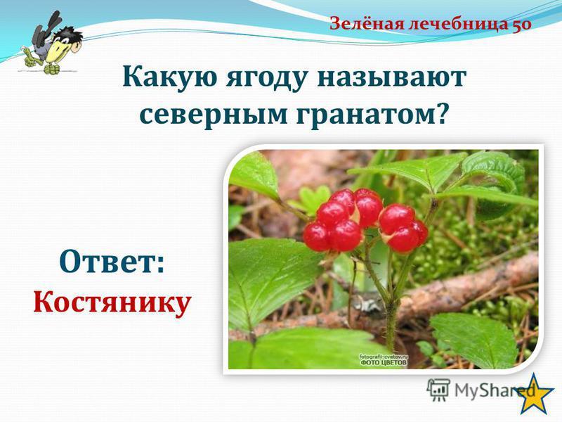 Зелёная лечебница 50 Ответ: Костянику Какую ягоду называют северным гранатом?