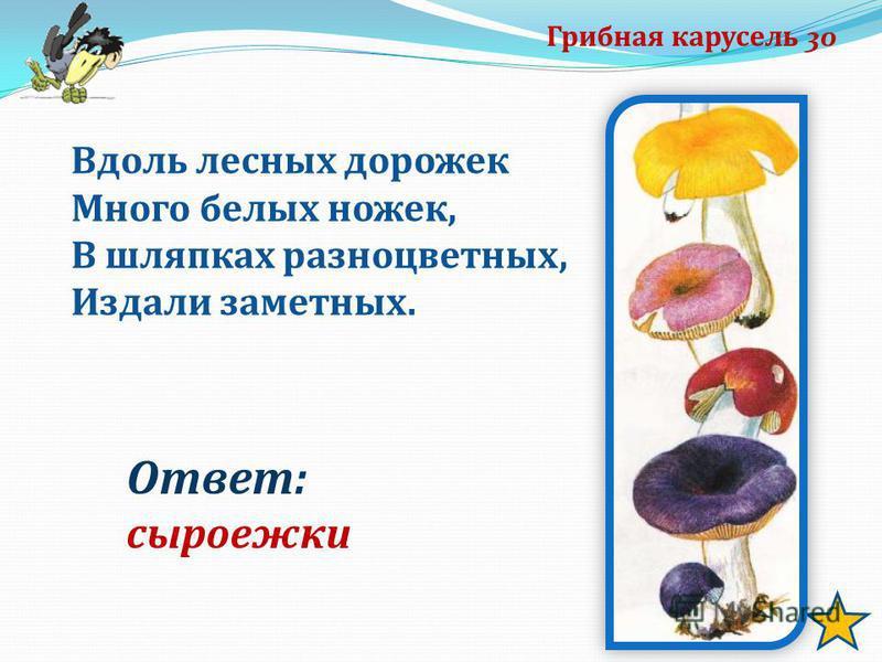 Грибная карусель 30 Вдоль лесных дорожек Много белых ножек, В шляпках разноцветных, Издали заметных. Ответ: сыроежки