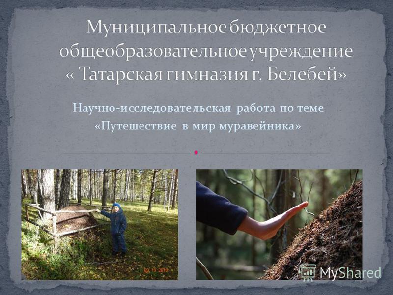 Научно-исследовательская работа по теме «Путешествие в мир муравейника»