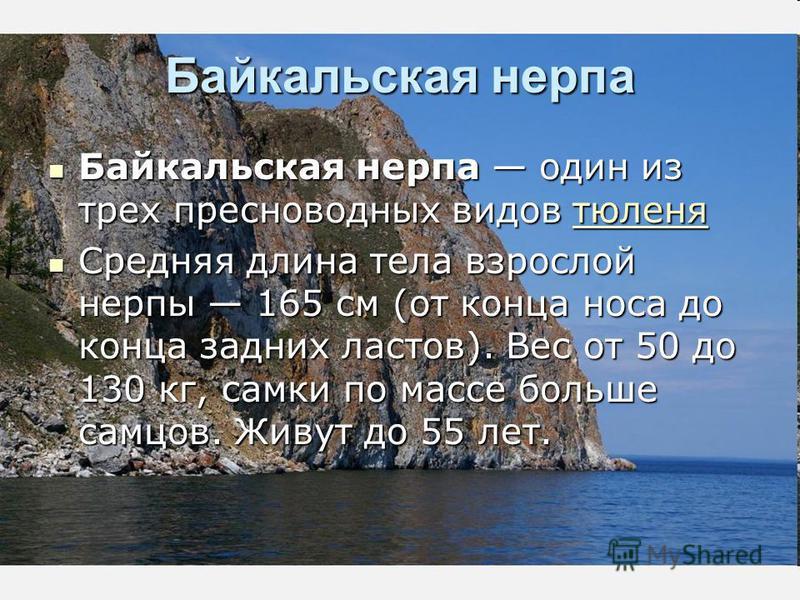 Байкальская нерпа Байкальская нерпа один из трех пресноводных видов тюленя Байкальская нерпа один из трех пресноводных видов тюленя Средняя длина тела взрослой нерпы 165 см (от конца носа до конца задних ластов). Вес от 50 до 130 кг, самки по массе б