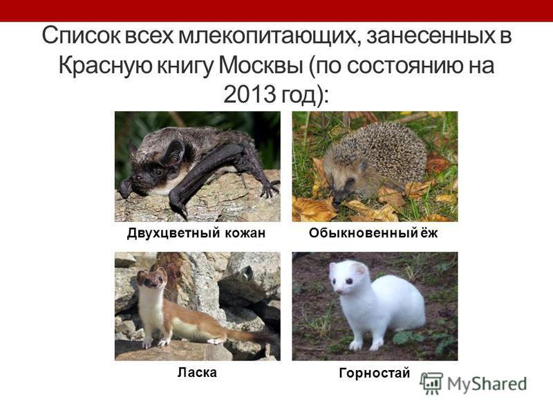 Список всех млекопитающих, занесенных в Красную книгу Москвы (по состоянию на 2013 год): Двухцветный кожан Обыкновенный ёж Ласка Горностай