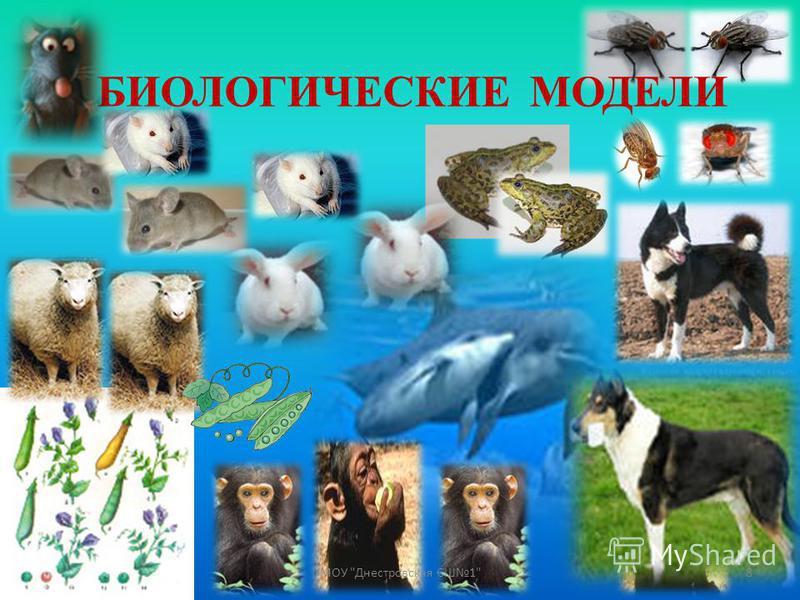 БИОЛОГИЧЕСКИЕ МОДЕЛИ 8МОУ Днестровская СШ1