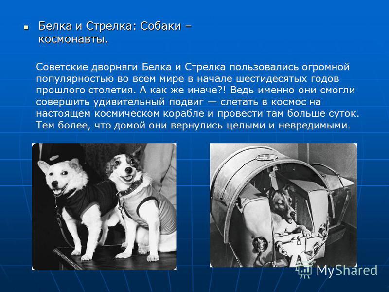 Белка и Стрелка: Собаки – космонавты. Белка и Стрелка: Собаки – космонавты. Советские дворняги Белка и Стрелка пользовались огромной популярностью во всем мире в начале шестидесятых годов прошлого столетия. А как же иначе?! Ведь именно они смогли сов
