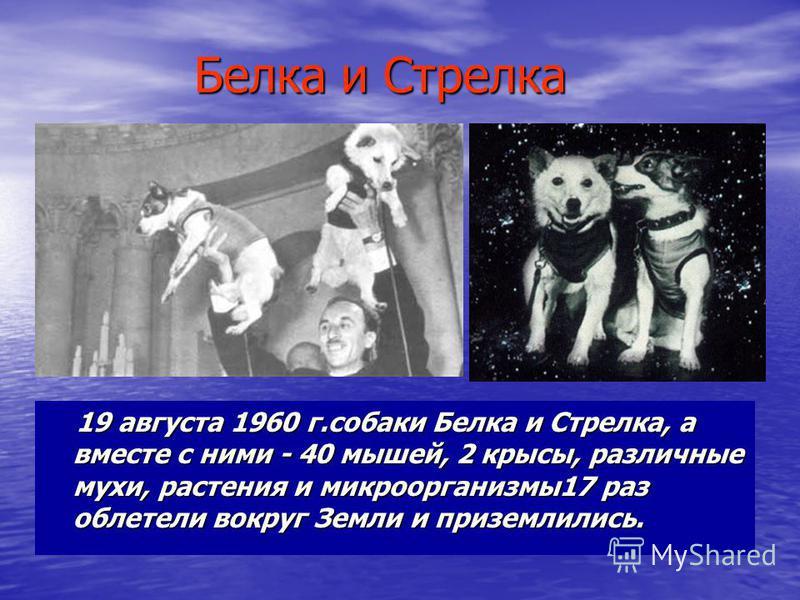 Белка и Стрелка 19 августа 1960 г.собаки Белка и Стрелка, а вместе с ними - 40 мышей, 2 крысы, различные мухи, растения и микроорганизмы 17 раз облетели вокруг Земли и приземлились. 19 августа 1960 г.собаки Белка и Стрелка, а вместе с ними - 40 мышей