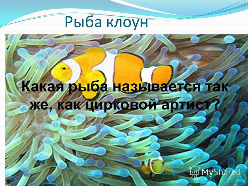 Рыба клоун Какая рыба называется так же, как цирковой артист?
