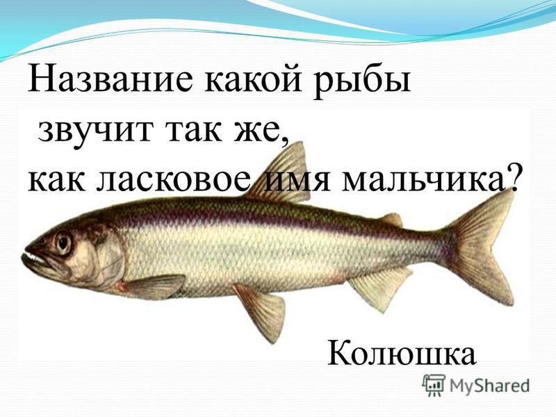 Название какой рыбы звучит так же, как ласковое имя мальчика? Колюшка