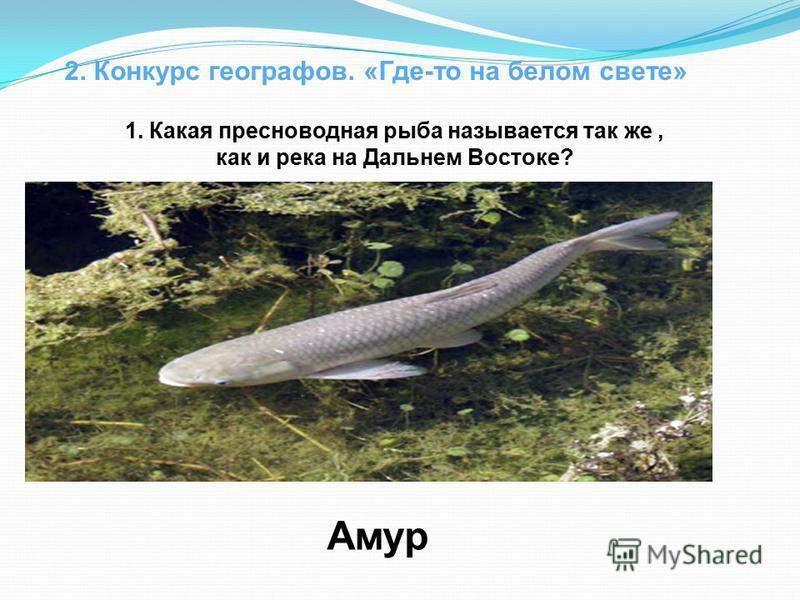 2. Конкурс географов. «Где-то на белом свете» 1. Какая пресноводная рыба называется так же, как и река на Дальнем Востоке? Амур
