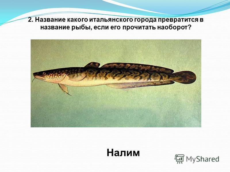 2. Название какого итальянского города превратится в название рыбы, если его прочитать наоборот? Налим