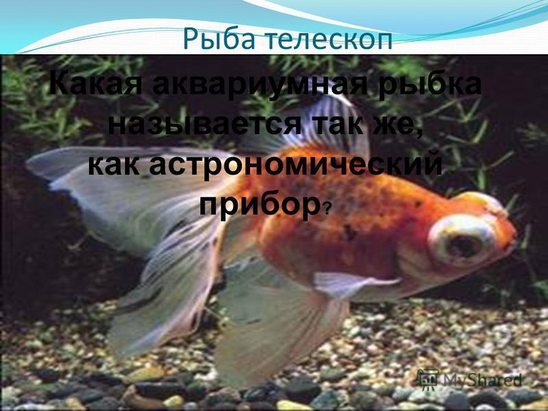 Рыба телескоп Какая аквариумная рыбка называется так же, как астрономический прибор ?