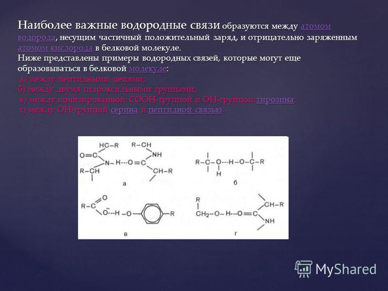 Наиболее важные водородные связи образуются между атомом водорода, несущим частичный положительный заряд, и отрицательно заряженным атомом кислорода в белковой молекуле. Ниже представлены примеры водородных связей, которые могут еще образовываться в