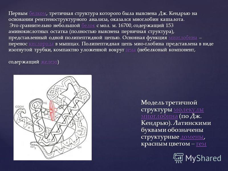 Первым белком, третичная структура которого была выяснена Дж. Кендрью на основании рентгеноструктурного анализа, оказался миоглобин кашалота. Это сравнительно небольшой белок с мол. м. 16700, содержащий 153 аминокислотных остатка (полностью выяснена
