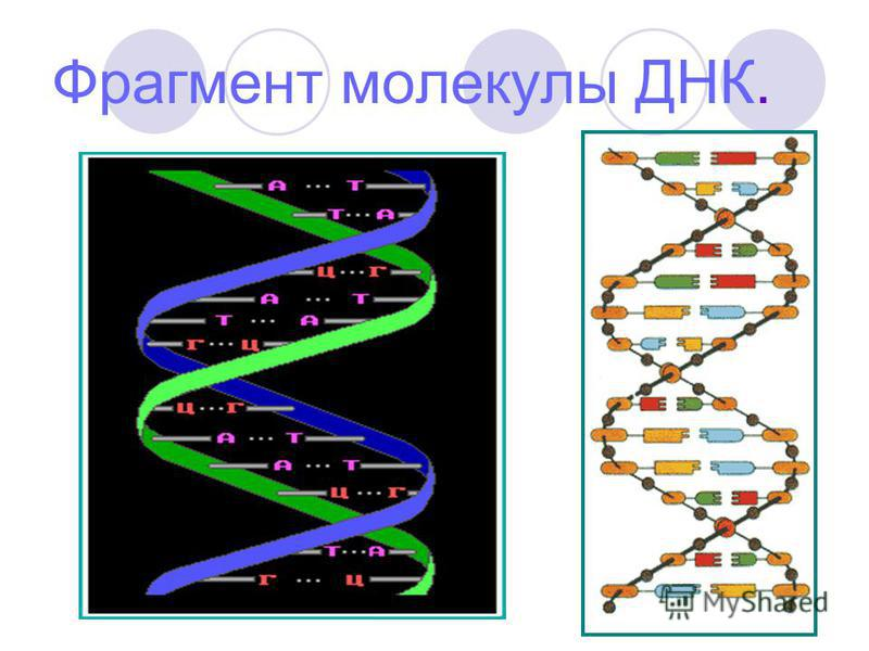 Фрагмент молекулы ДНК.