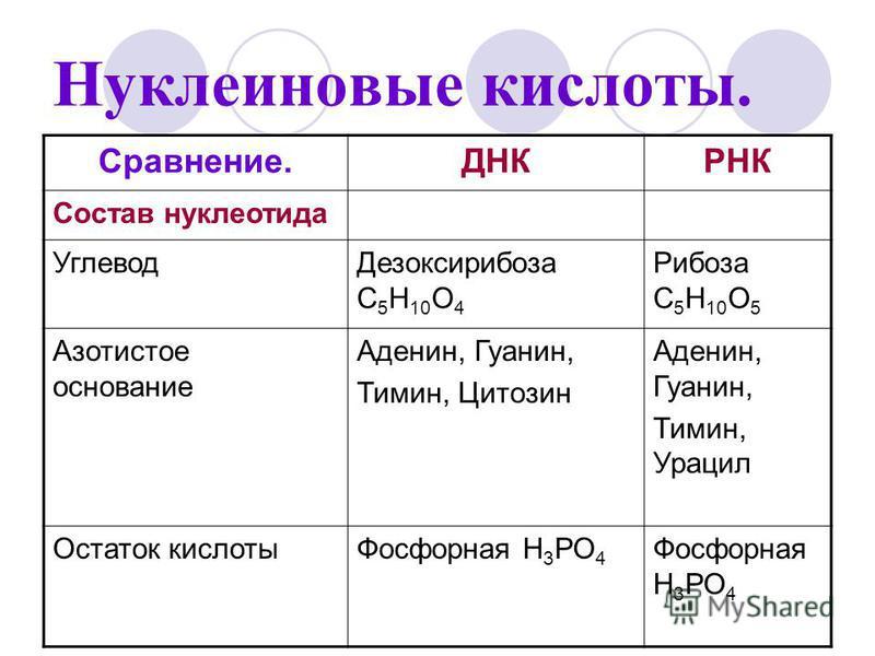 Нуклеиновые кислоты. Сравнение.ДНКРНК Состав нуклеотида Углевод Дезоксирибоза С 5 Н 10 О 4 Рибоза С 5 Н 10 О 5 Азотистое основание Аденин, Гуанин, Тимин, Цитозин Аденин, Гуанин, Тимин, Урацил Остаток кислоты Фосфорная Н 3 РО 4
