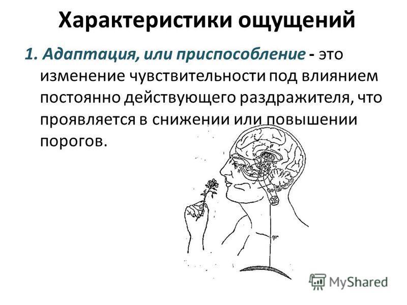 1. Адаптация, или приспособление - это изменение чувствительности под влиянием постоянно действующего раздражителя, что проявляется в снижении или повышении порогов. Характеристики ощущений