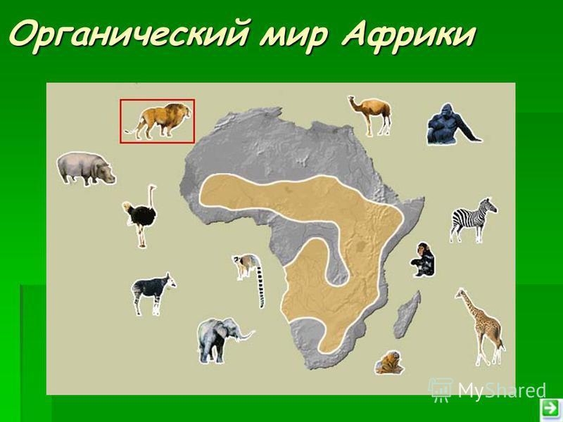 Органический мир Африки