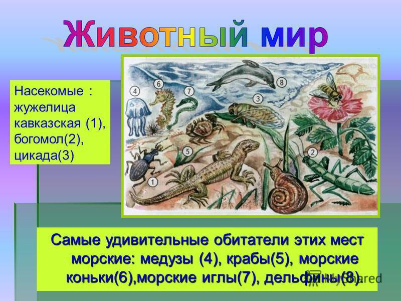 Самые удивительные обитатели этих мест морские: медузы (4), крабы(5), морские коньки(6),морские иглы(7), дельфины(8). Насекомые : жужелица кавказская (1), богомол(2), цикада(3)