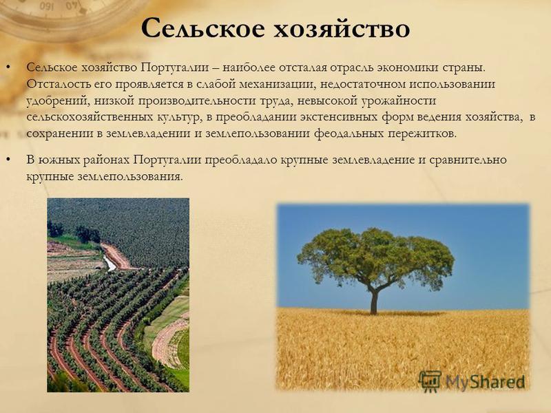 Сельское хозяйство Сельское хозяйство Португалии – наиболее отсталая отрасль экономики страны. Отсталость его проявляется в слабой механизации, недостаточном использовании удобрений, низкой производительности труда, невысокой урожайности сельскохозяй