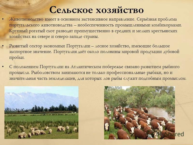 Сельское хозяйство Животноводство имеет в основном экстенсивное направление. Серьёзная проблема португальского животноводства – необеспеченность промышленными комбикормами. Крупный рогатый скот разводят преимущественно в средних и мелких крестьянских