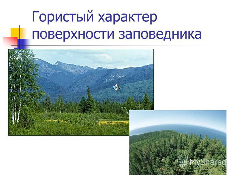 Баргузинский заповедник К моменту создания заповедника на озере Байкал там обитало не более 30 соболей. Через несколько лет соболи заселили не только территорию заповедника, но и вышли за ее пределы.