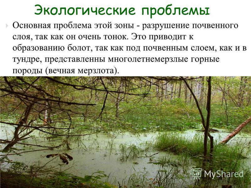 Основная проблема этой зоны - разрушение почвенного слоя, так как он очень тонок. Это приводит к образованию болот, так как под почвенным слоем, как и в тундре, представлены многолетнемерзлые горные породы (вечная мерзлота). Экологические проблемы