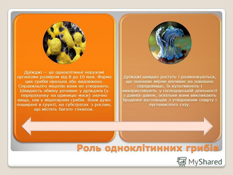 Роль одноклітинних грибів Дріжджі це одноклітинні нерухомі організми розміром від 8 до 10 мкм. Форма цих грибів овальна або видовжена. Справжнього міцелію вони не утворюють. Швидкість обміну речовин у дріжджів (у перерахунку на одиницю маси) значно в