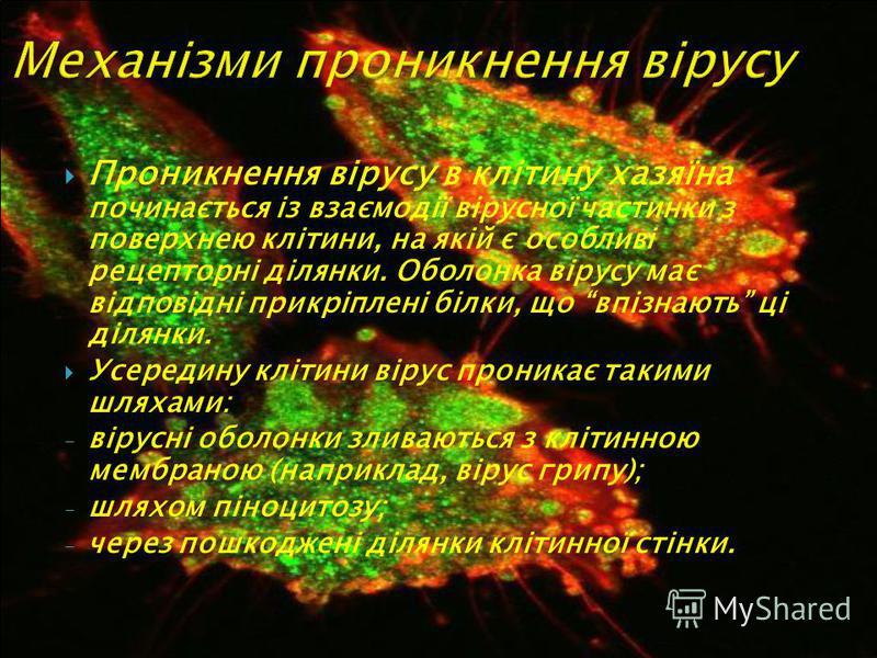 Проникнення вірусу в клітину хазяїна починається із взаємодії вірусної частинки з поверхнею клітини, на якій є особливі рецепторні ділянки. Оболонка вірусу має відповідні прикріплені білки, що впізнають ці ділянки. Усередину клітини вірус проникає та