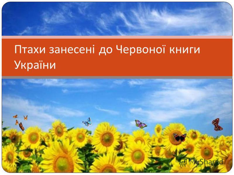 Птахи занесені до Червоної книги України
