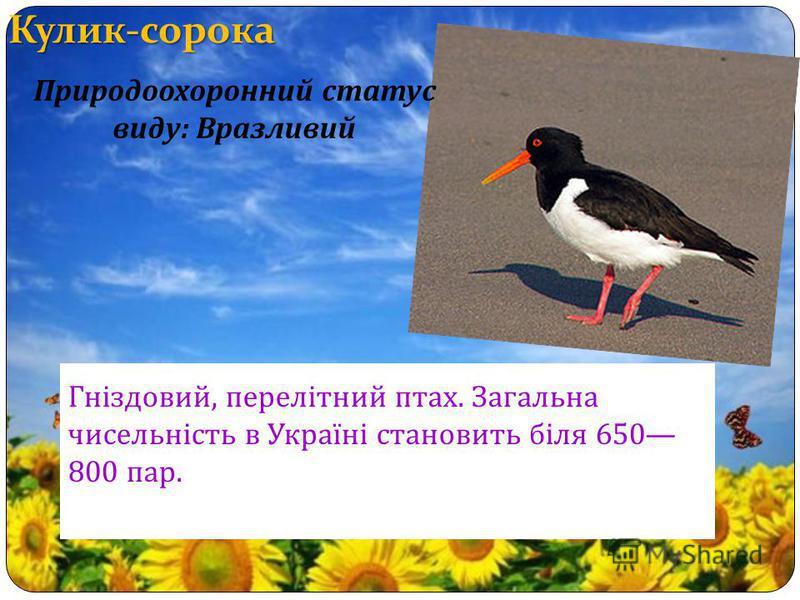 Кулик-сорока Гніздовий, перелітний птах. Загальна чисельність в Україні становить біля 650 800 пар. Природоохоронний статус виду : Вразливий