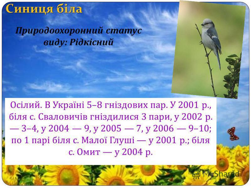 Осілий. В Україні 5–8 гніздових пар. У 2001 р., біля с. Сваловичів гніздилися 3 пари, у 2002 р. 3–4, у 2004 9, у 2005 7, у 2006 9–10; по 1 парі біля с. Малої Глуші у 2001 р.; біля с. Омит у 2004 р. Природоохоронний статус виду : Рідкісний
