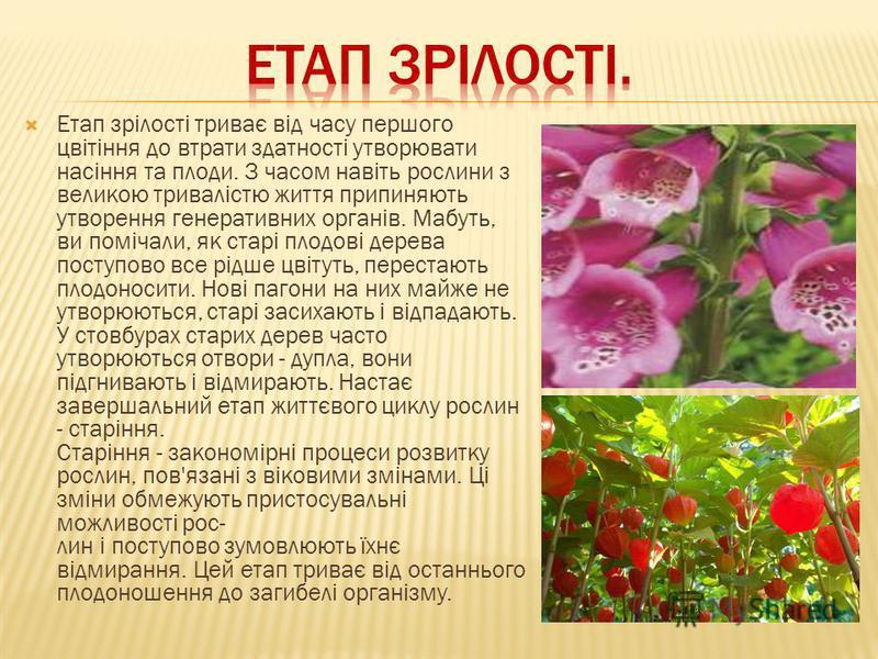 Етап зрілості триває від часу першого цвітіння до втрати здатності утворювати насіння та плоди. З часом навіть рослини з великою тривалістю життя припиняють утворення генеративних органів. Мабуть, ви помічали, як старі плодові дерева поступово все рі