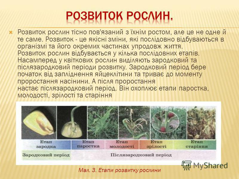 Розвиток рослин тісно пов'язаний з їхнім ростом, але це не одне й те саме. Розвиток - це якісні зміни, які послідовно відбуваються в організмі та його окремих частинах упродовж життя. Розвиток рослин відбувається у кілька послідовних етапів. Насампер