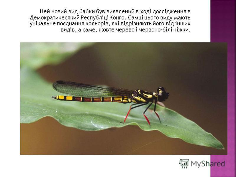 Цей новий вид бабки був виявлений в ході дослідження в Демократичесякий Республіці Конго. Самці цього виду мають унікальне поєднання кольорів, які відрізняють його від інших видів, а саме, жовте черево і червоно-білі ніжки.