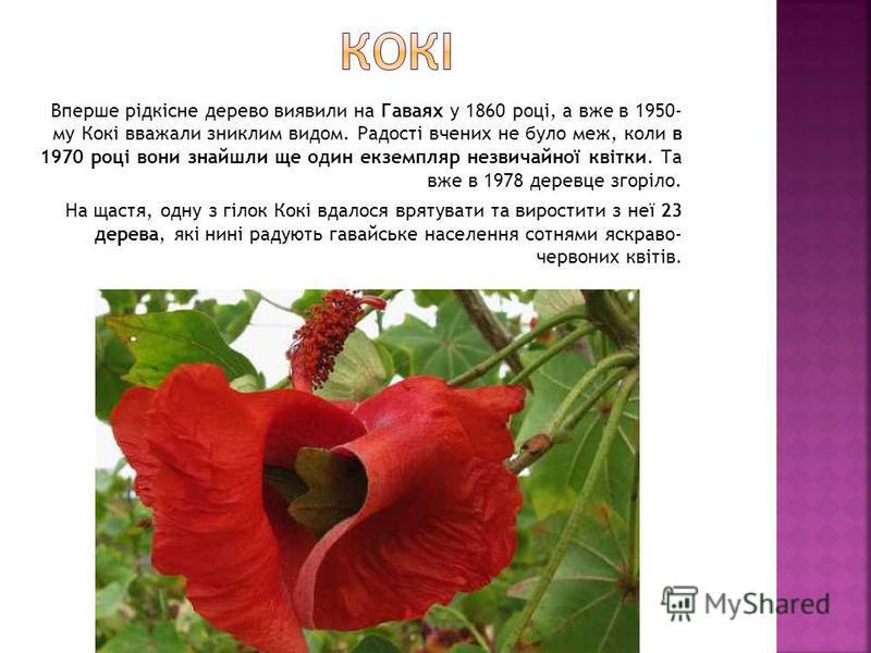 Вперше рідкісне дерево виявили на Гаваях у 1860 році, а вже в 1950- му Кокі вважали зниклим видом. Радості вчених не було меж, коли в 1970 році вони знайшли ще один екземпляр незвичайної квітки. Та вже в 1978 деревце згоріло. На щастя, одну з гілок К