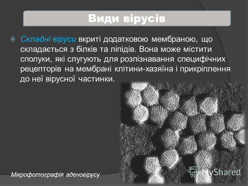 Складні віруси вкриті додатковою мембраною, що складається з білків та ліпідів. Вона може містити сполуки, які слугують для розпізнавання специфічних рецепторів на мембрані клітини-хазяїна і прикріплення до неї вірусної частинки. Види вірусів Мікрофо