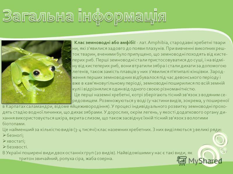 Клас земноводні або амфібії - лат. Amphibia, стародавні хребетні твари ни, які з'явилися задовго до появи плазунів. При вивченні викопних реш- ток тварин, вченими було припущено, що земноводні походять від кисте- перих риб. Перші земноводні стали при