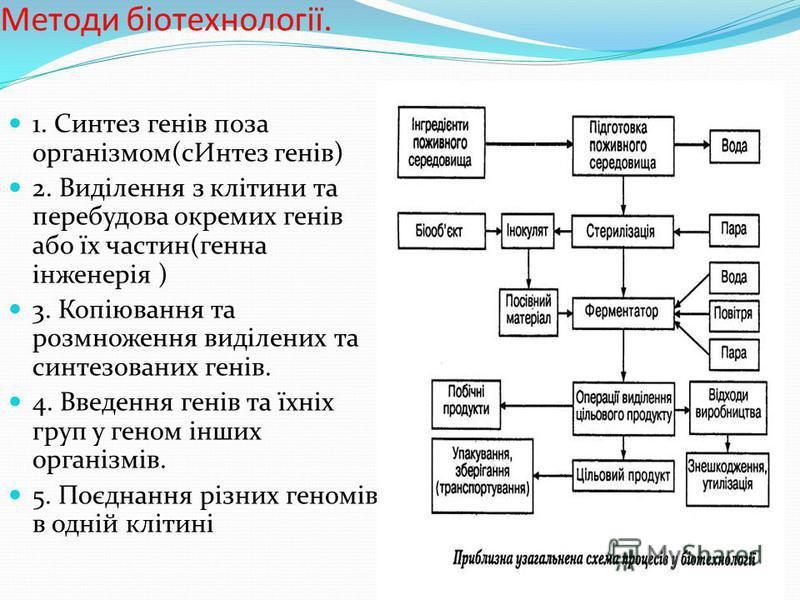 1. Синтез генів поза організмом(сИнтез генів) 2. Виділення з клітини та перебудова окремих генів або їх частин(генна інженерія ) 3. Копіювання та розмноження виділених та синтезованих генів. 4. Введення генів та їхніх груп у геном інших організмів. 5