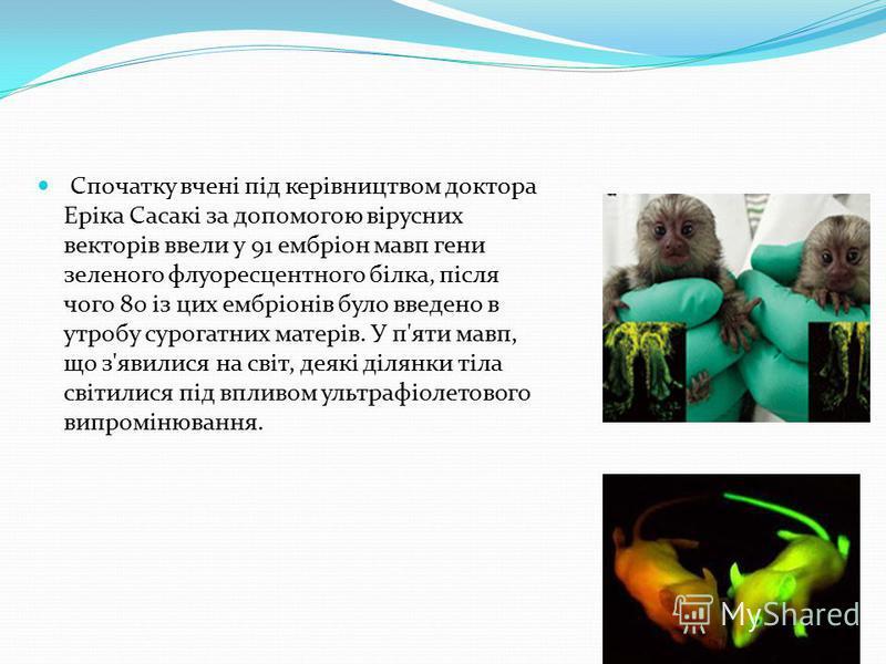 Спочатку вчені під керівництвом доктора Еріка Сасакі за допомогою вірусних векторів ввели у 91 ембріон мавп гени зеленого флуоресцентного білка, після чого 80 із цих ембріонів було введено в утробу сурогатних матерів. У п'яти мавп, що з'явилися на св