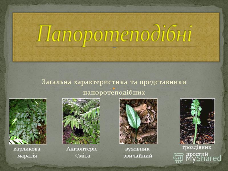 Загальна характеристика та представники папоротеподібних карликова маратія Ангіоптеріс Сміта вужівник звичайний гроздівник простий