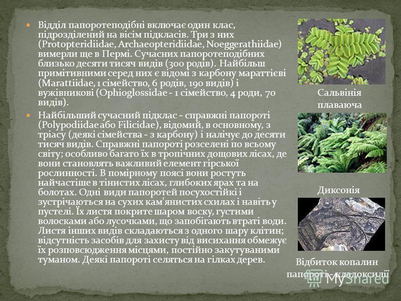Відділ папоротеподібні включає один клас, підрозділений на вісім підкласів. Три з них (Protopteridiidae, Archaeopteridiidae, Noeggerathiidae) вимерли ще в Пермі. Сучасних папоротеподібних близько десяти тисяч видів (300 родів). Найбільш примітивними