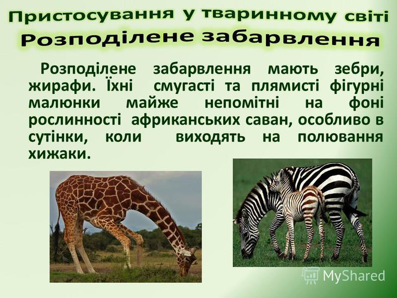 Розподілене забарвлення мають зебри, жирафи. Їхні смугасті та плямисті фігурні малюнки майже непомітні на фоні рослинності африканських саван, особливо в сутінки, коли виходять на полювання хижаки.