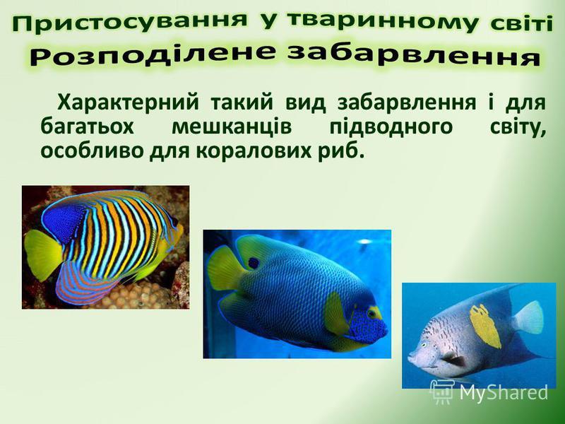 Характерний такий вид забарвлення і для багатьох мешканців підводного світу, особливо для коралових риб.