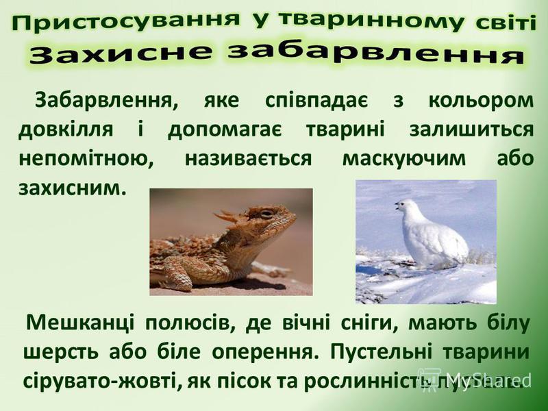 Забарвлення, яке співпадає з кольором довкілля і допомагає тварині залишиться непомітною, називається маскуючим або захисним. Мешканці полюсів, де вічні сніги, мають білу шерсть або біле оперення. Пустельні тварини сірувато-жовті, як пісок та рослинн