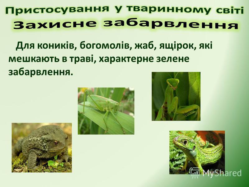 Для коників, богомолів, жаб, ящірок, які мешкають в траві, характерне зелене забарвлення.