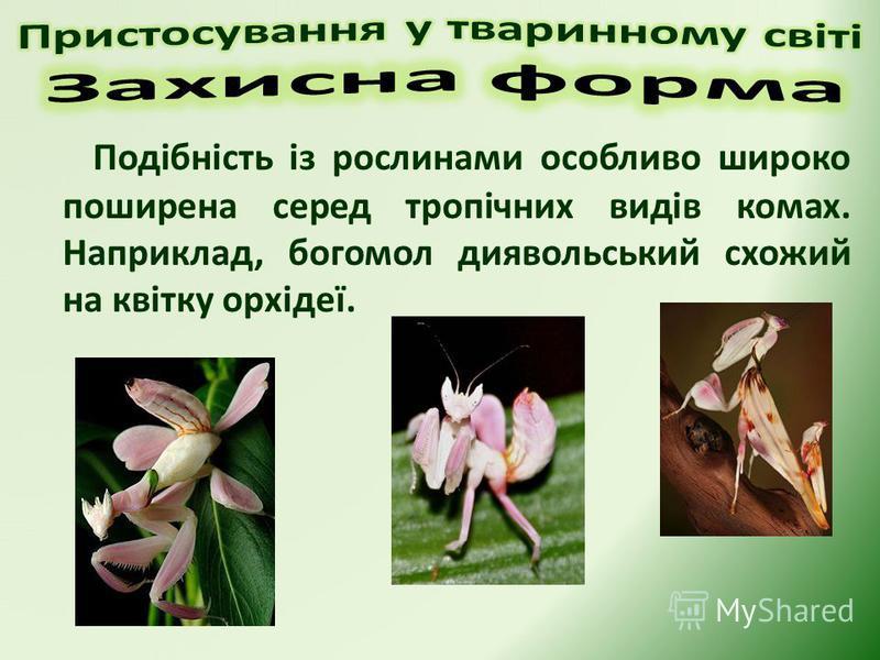 Подібність із рослинами особливо широко поширена серед тропічних видів комах. Наприклад, богомол диявольський схожий на квітку орхідеї.